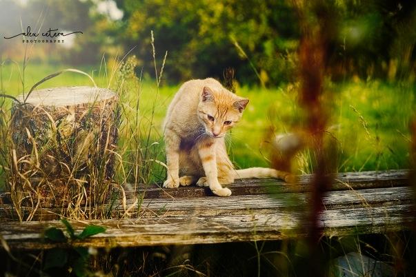 holidays cat 2