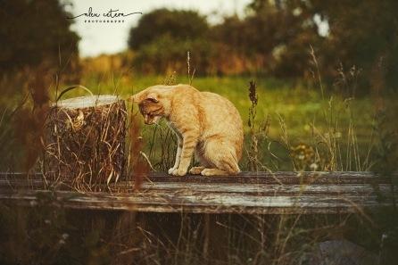 holidays cat 3
