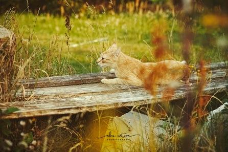 holidays cat1